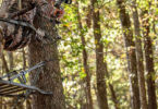 Best Hunting Treestands